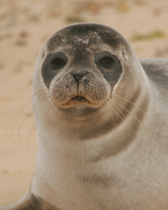 Seals (15).jpg