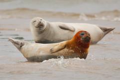 Seals (8).jpg