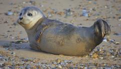 Seals (22).jpg