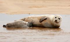 Seals (3).jpg
