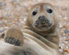 Seals (26).jpg