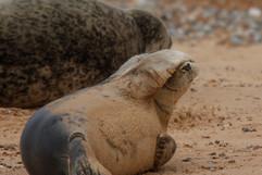 Seals (2).jpg
