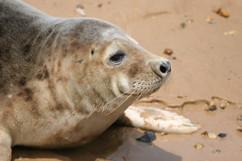 Seals (19).jpg