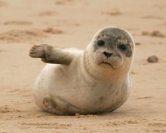 Seals (25).jpg