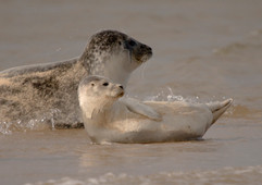 Seals (10).jpg