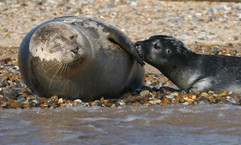 Seals (21).jpg