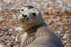 Seals (7).jpg
