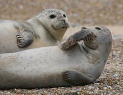 Seals (20).jpg