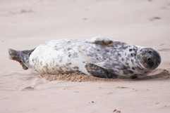 Seals (6).jpg