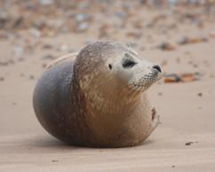 Seals (12).jpg
