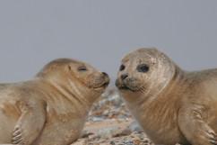 Seals (23).jpg