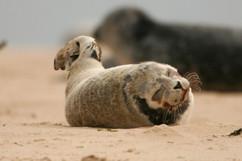 Seals (11).jpg