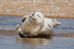 Seals (1).jpg