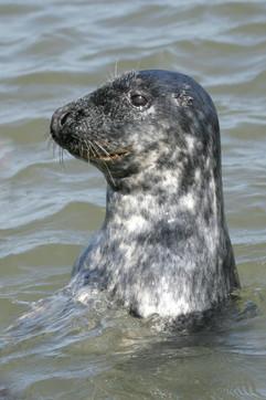 Seals (17).jpg