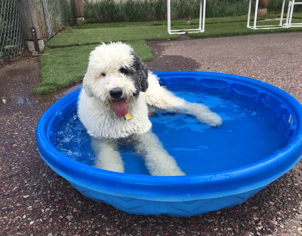 murphy pool.jpg