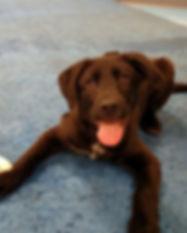 puppy dayschool socialization 2.jpg
