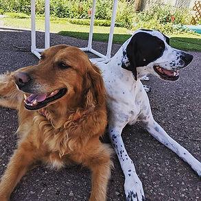 Flower and Lira enjoying  #nationaldogda