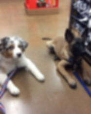 puppy dayschool field trip.jpg