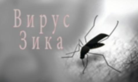 Вирус Зика.jpg
