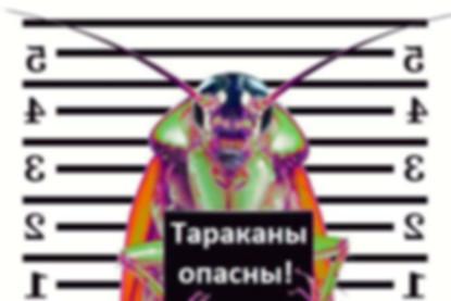 Тараканы опасны.jpg