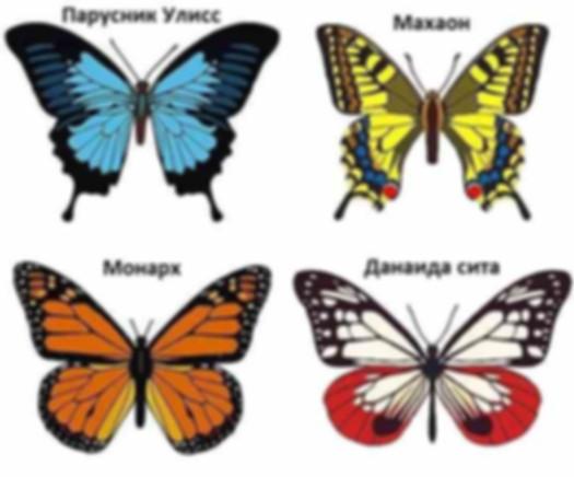 Виды бабочек.jpg