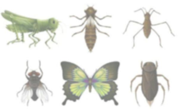 насекомые.jpg