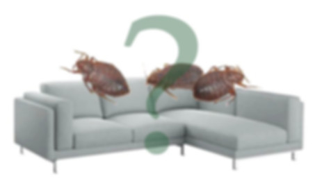 клопы в диване.jpg