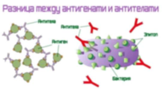 антигены.jpg