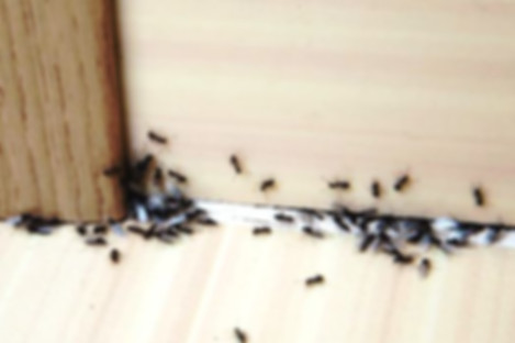 От муравьев в квартире.jpg