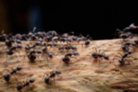 муравьи.jpg