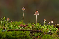 mushrooms-3838234_1920.jpg
