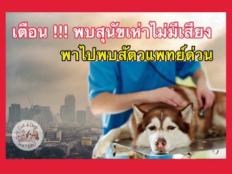 เตือนระวังภัยจากฝุ่นละออง PM 2.5 ทำร้ายสัตว์เลี้ยง
