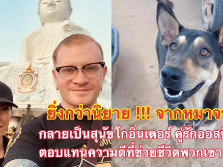 สุนัขไทยน้ำใจงาม คู่รักชาวออสซี่ตอบแทนด้วยการพากลับบ้านด้วย