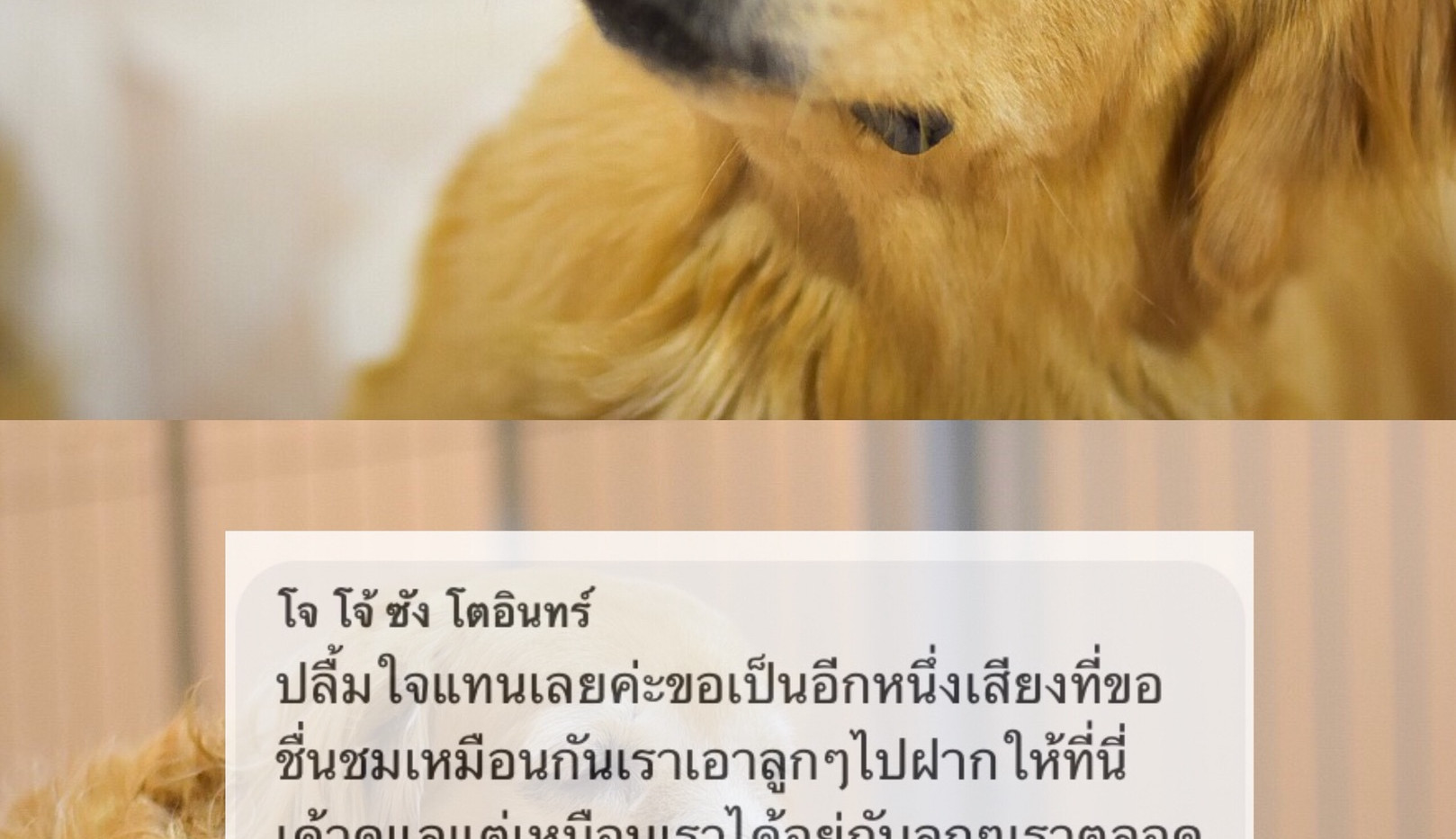 S__65437812.jpg