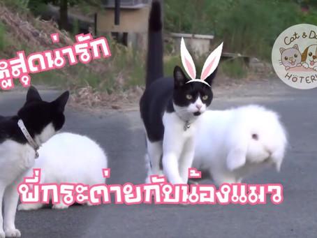 คู่หูต่างสายพันธุ์ กระต่ายและแมว
