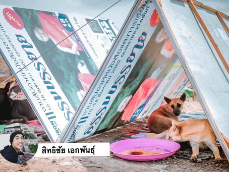 กลุ่มคนดีเข้าช่วยสร้างที่พักชั่วคราวให้น้องหมาหลบแดดหลบฝน ให้ข้าวให้น้ำ ในเหตุการณ์น้ำท่วม อุบลฯ