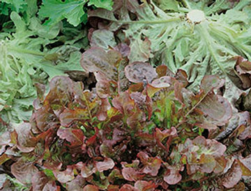 Sla red Salad Bowl