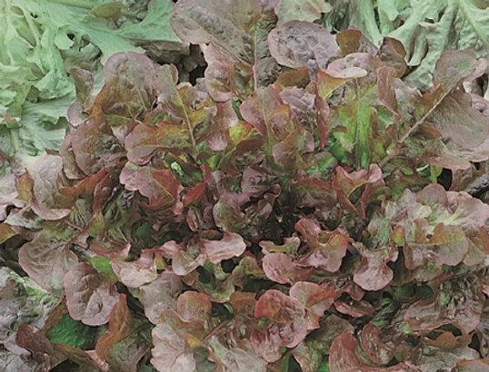 BIO Sla Red Salad Bowl