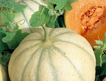Meloen Rubens F1 Hybride