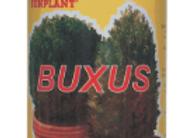 Sunplant Buxus