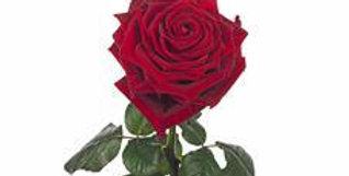 luxe roos (verpakt)
