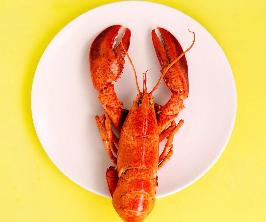 lobster%20on%20white%20saucer_edited.jpg