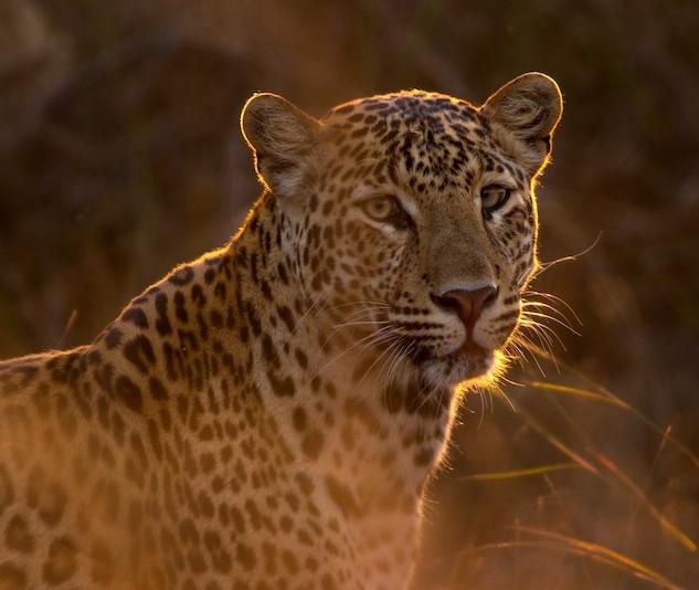 leopardpetite unsplash.jpg