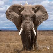 elephant recadre-unsplash copie.jpg