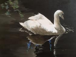 Serenity Swan 20x16 acrylic