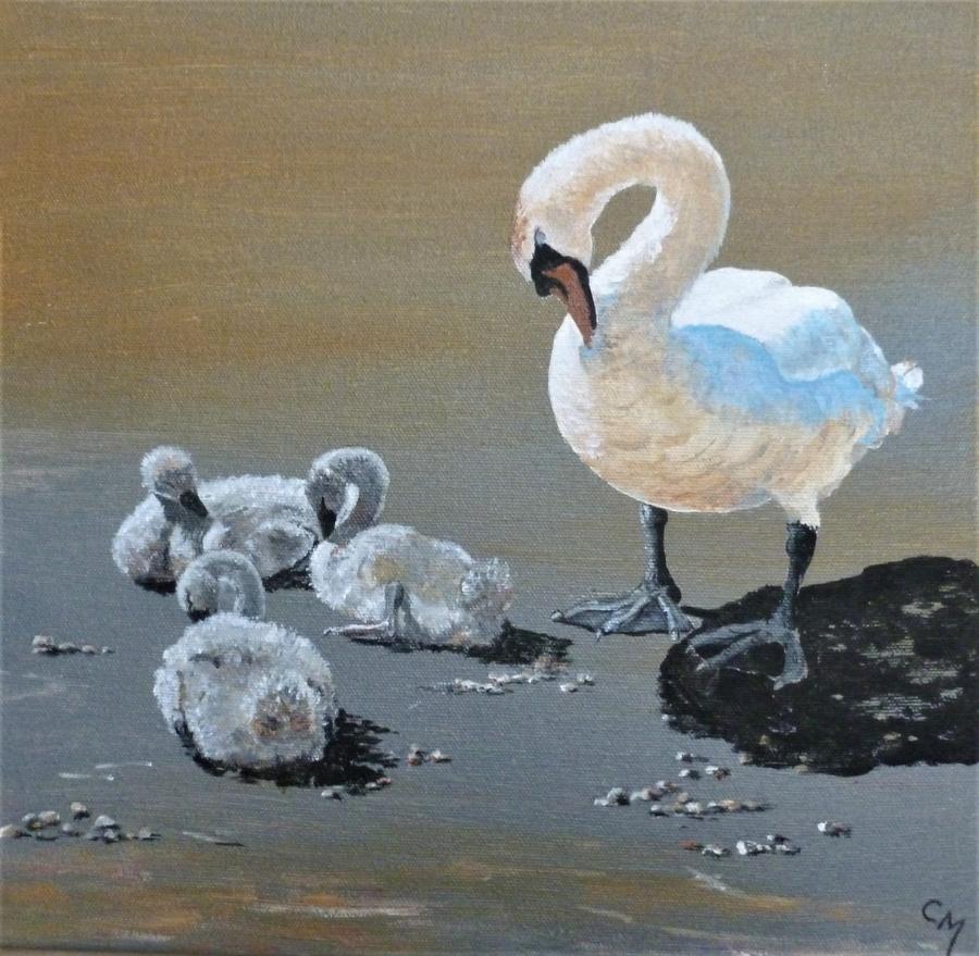 Swan Siesta acrylic