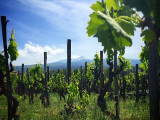 I went wine tasting on the slopes of the Etna Mount.