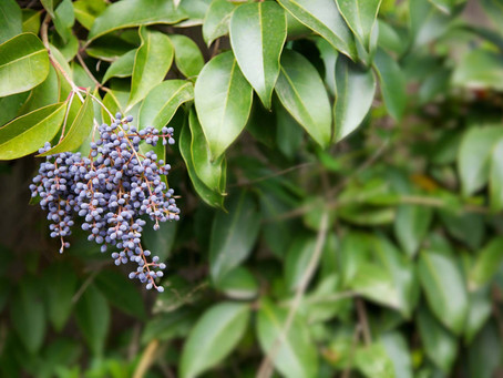 The problem with Privet