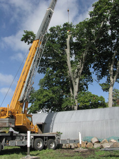 Oak Tree dismantling with crane - Cambridge