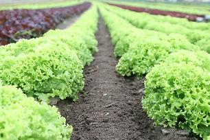 food-salad-field-fresh-89267.jpg
